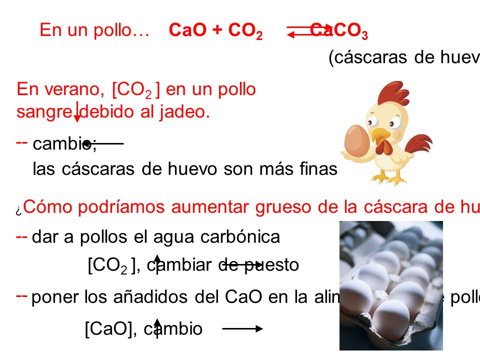 En verano, [CO2 ] en un pollo sangre debido al jadeo.